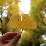 【日本東京】秋天明治神宮外苑銀杏祭
