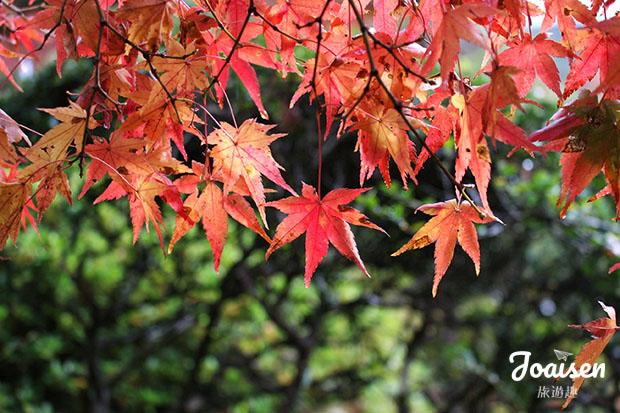 【日本佐賀】國家名勝好「楓」景!神埼「九年庵」