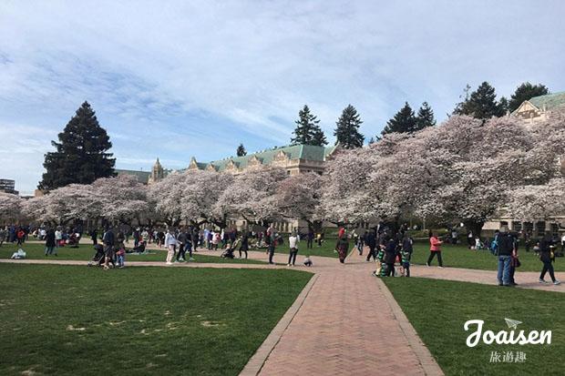 【美國華盛頓】一起去賞櫻花吧!西雅圖華盛頓大學賞櫻趣!